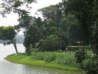 Upper Seletar Reservoir