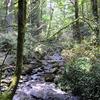 Tryon Creek