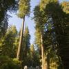US 199 Redwood Highway