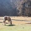 Valley In Manaslu - Nepal Himalayas