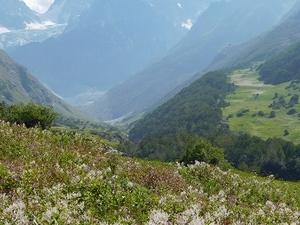 Valley of Flowers & Hemkund Trek Tour Fotos