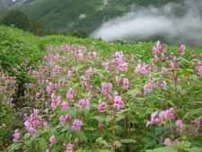 A Mesmerizing Scene From Valley Of Flowers