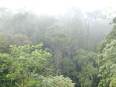 Vegetation Of The Sinharaja