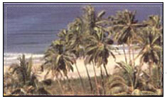 Velneshwar Praia