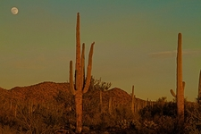 View At Sunset - Saguaro NP