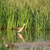 View Chilika Wetlands 'Ramsar Site'