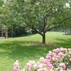 View Columbus Park Of Roses