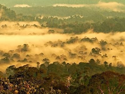 View Danum Valley National Park - Malaysia