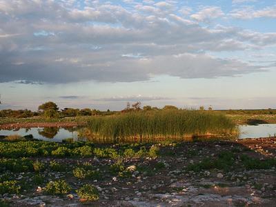 View Etosha National Park Landscape