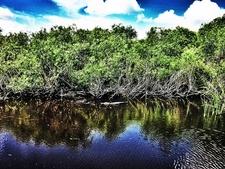 View Everglades - Miami FL