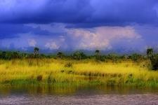 View Florida Everglades Landscape