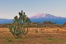 View Kilimanjaro - Tanzania