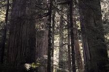 View Mt. Baker Wilderness WA