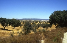 View Of Alentejo