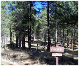 View Of Campbell Mesa Trail System