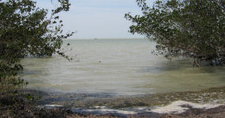 View Of Florida Bay From The Bayshore Loop Trail