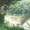 View Of The Kelani River