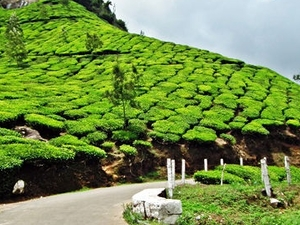 Best of Kerala Package