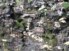 View Ricketts Glen State Park - Pennsylvania
