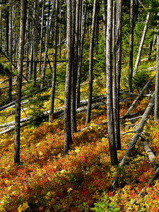 Views Along Waterton Valley Trail - Glacier - Montana - USA