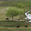 Shey Phoksundo Parque Nacional
