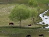 View Shey Phoksundo National Park