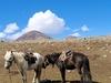 View Tavan Bogd National Park
