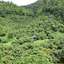 View Thai Forest