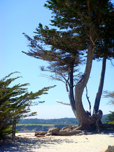 The Citys White Sand Beach Carmel