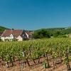 View Vineyards Near Gevrey-Chambertin