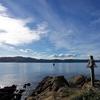 View Wellington Harbour NZ