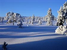 Vinter In Buskerud