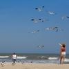 Visitors & Birds At Kure Beach NC