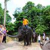 Visitors Feeding An Elephant
