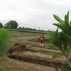 Visit To Sanghol Uchha Pind
