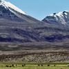 Volcan Acotango And Cerro Capurata