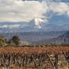 Volcano Aconcagua & Vineyards