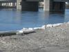 Volodarsky Bridge