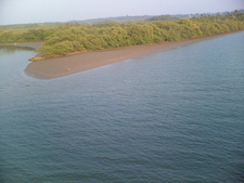 Mangroves On Valapattanam River