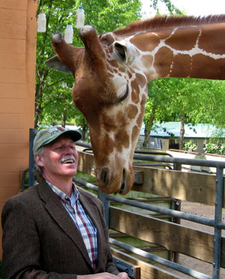 Giraffes At The Little Rock Zoo