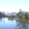Gwydir Forest