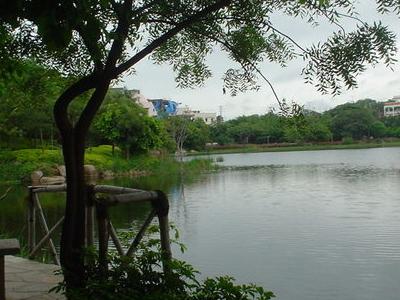 View Of Lotus Pond