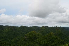 View From Lookout Tower