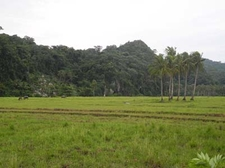 View Of Forest From Caramoan