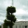 Vlf Transmitter Grimeton