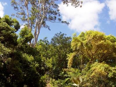 Wahiawa  Botanical  Garden     General  View