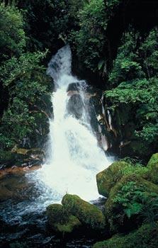 Waiatiu Falls Track