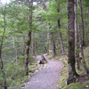 Waihua Hut To Galatea Road Trail - Te Urewera National Park - New Zealand