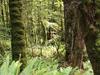 Waimana Valley - Te Urewera National Park - New Zealand