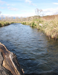 Waiotaka River